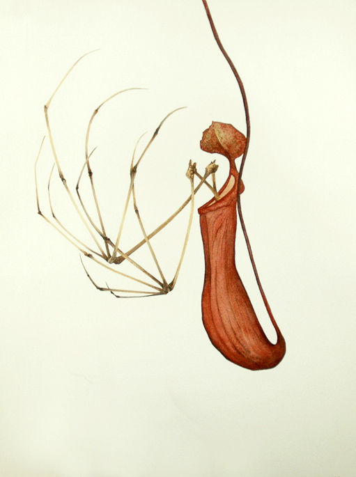 Untitled 170312 (2012) Ink & watercolour on paper, 280 x 380mm, $poa