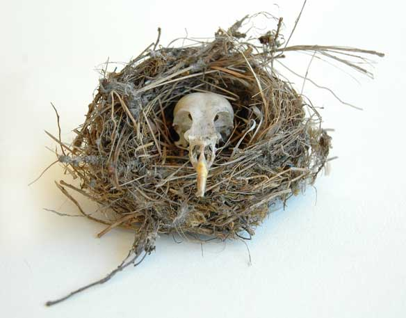 Bird-skull-nesting-sharnae-beardsley