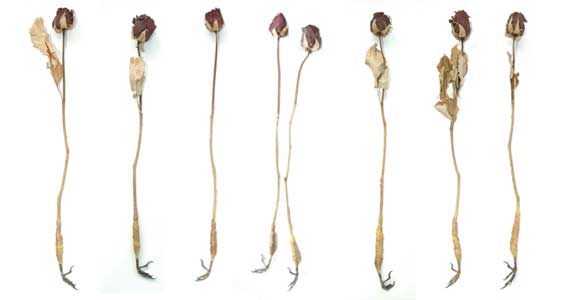 Roses with bird claws sharnae beardsley sculpture