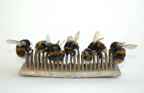 bumblebee-flower-frog-Sharnae-Beardsley