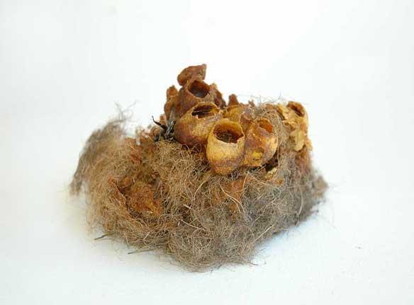 bumblebee-nest-Sharnae-Beardsley