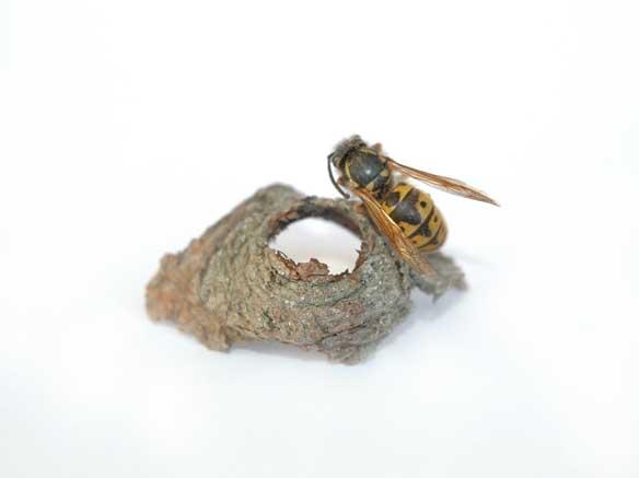 wasp-&-wood-shrine-Sharnae-Beardsley